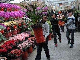 想做花卉生意从哪进货?建议你看下这个