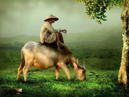 农村人和城里人的区别