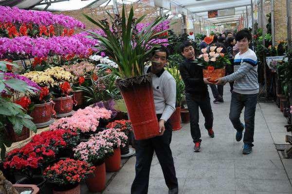 想做花卉生意从哪进货?建议你看下这个 第1张