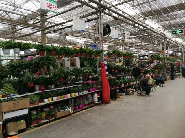 想做花卉生意从哪进货?建议你看下这个 第2张