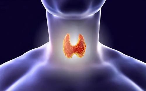 甲亢疾病是由桥本氏甲状腺炎引起的吗?两者究竟有何联系? 第1张
