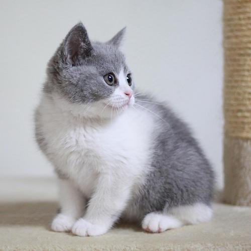 没钱不能养猫吗?资深猫奴告诉你养猫一个月多少钱 第1张